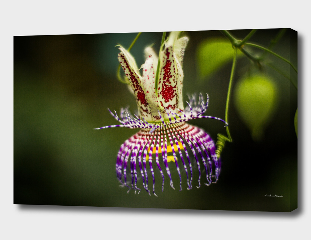 Flower#5