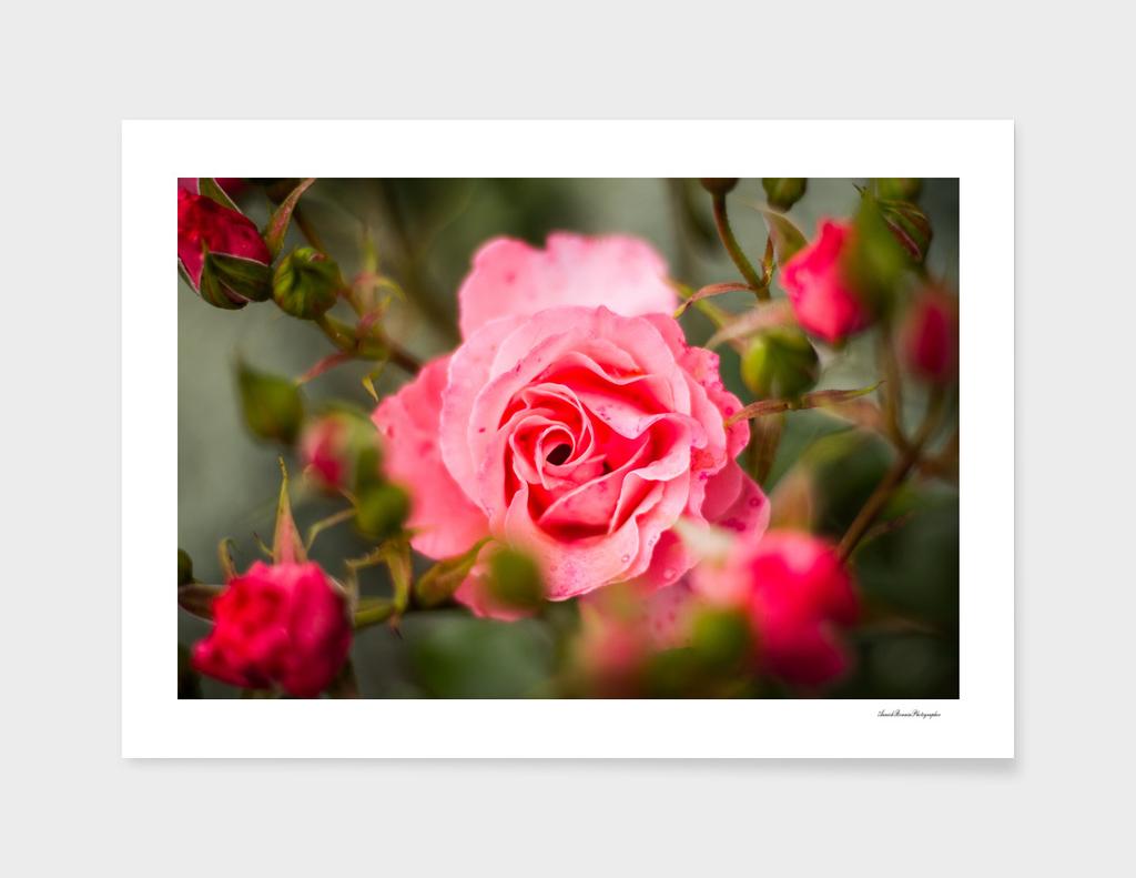Flower#9