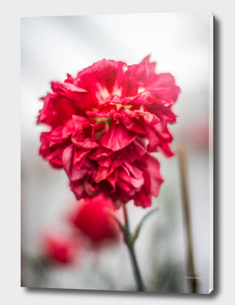 Flower#10