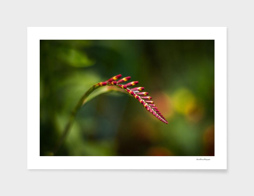 Flower#11