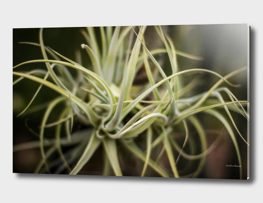 Fat Plant#2