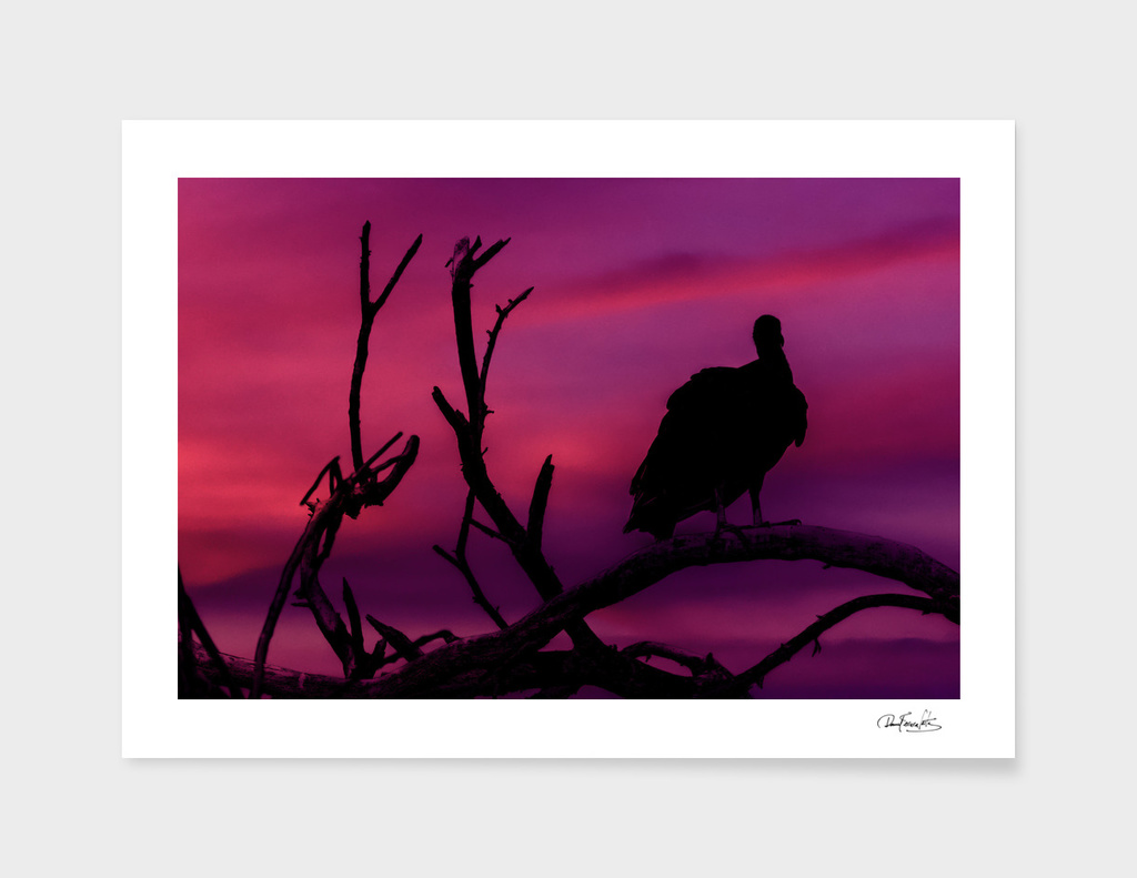 Vultures at Top of Tree Silhouette Illustration