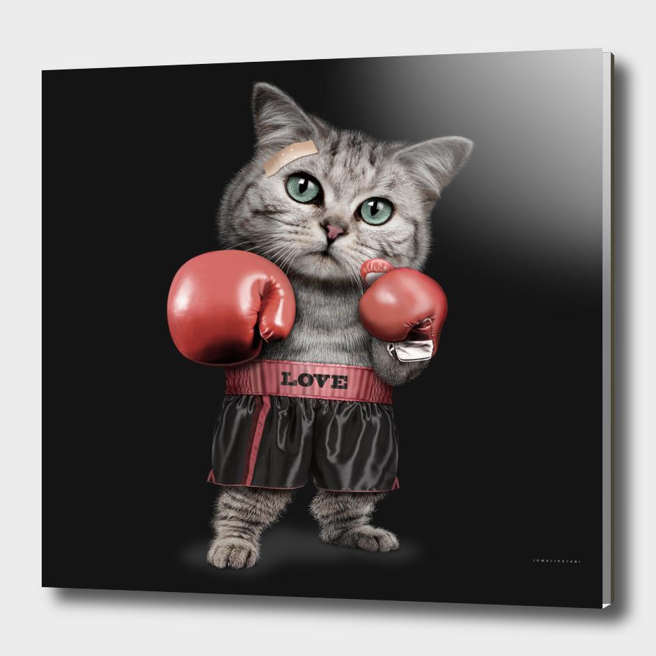BOXER CAT
