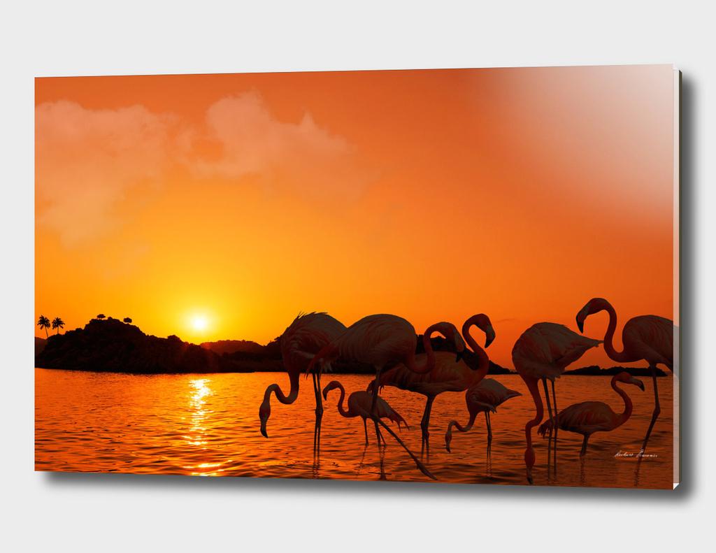 RDP-COMP 550003 Flamingos Sunset_