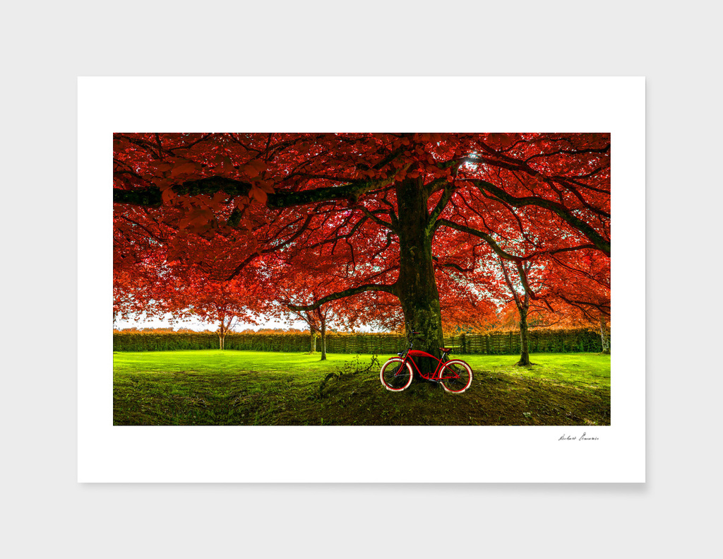 RDP-COMP 550012 RED TREE RED BIKE