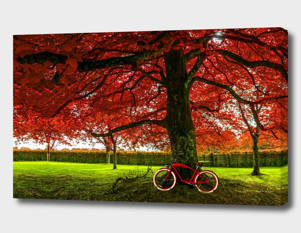 RDP-COMP 550012 RED TREE RED BIKE
