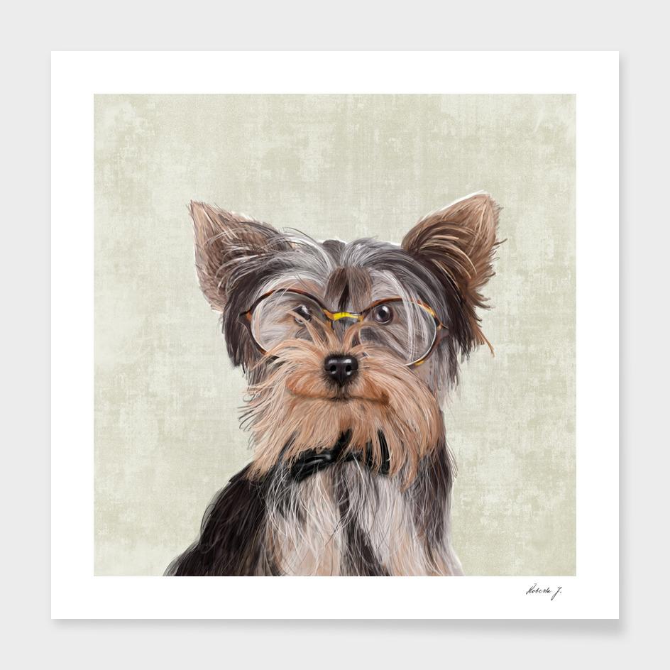 Mr Yorkshire Terrier