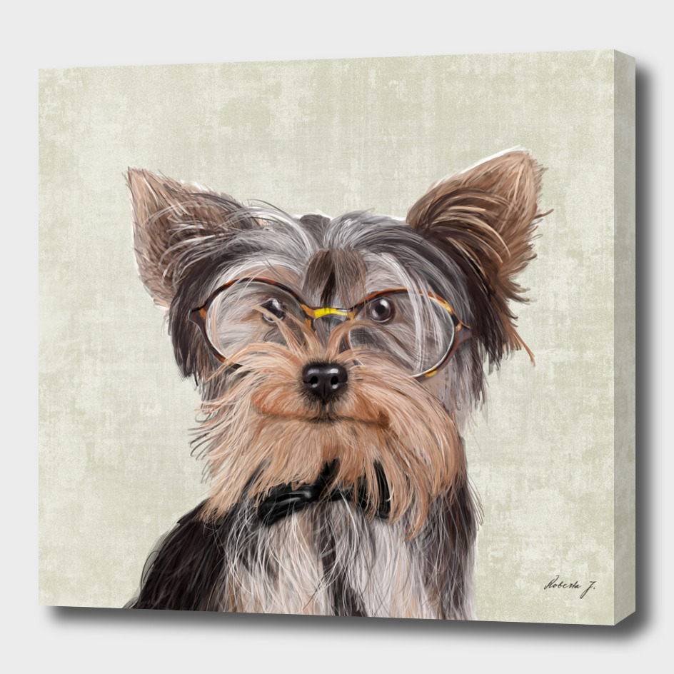 Mr Yorkshire Terrier