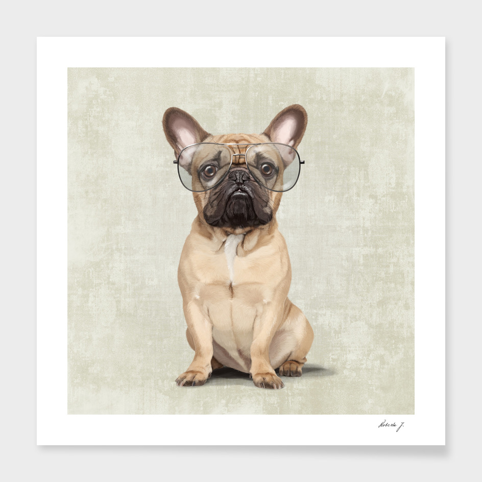 Mr French Bulldog