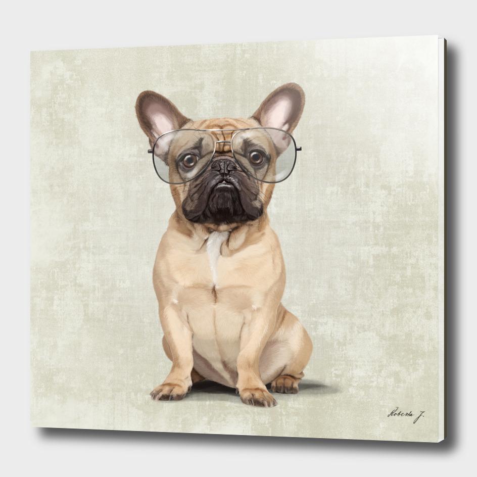 Mr French Bulldog