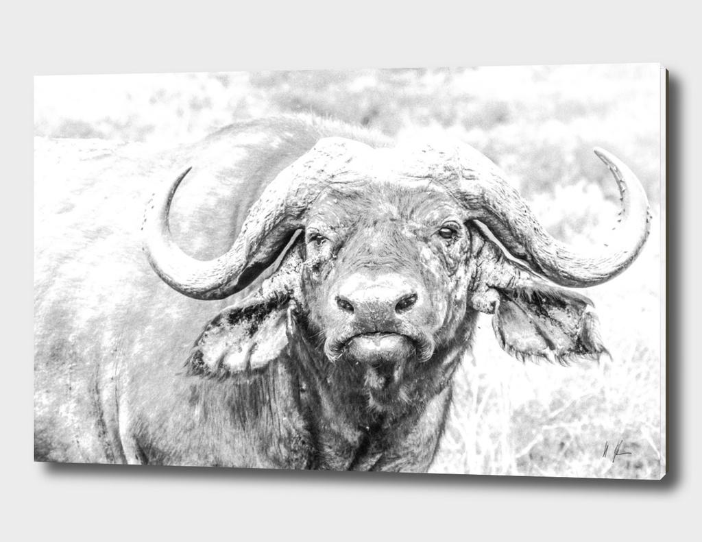 Old Buffalo