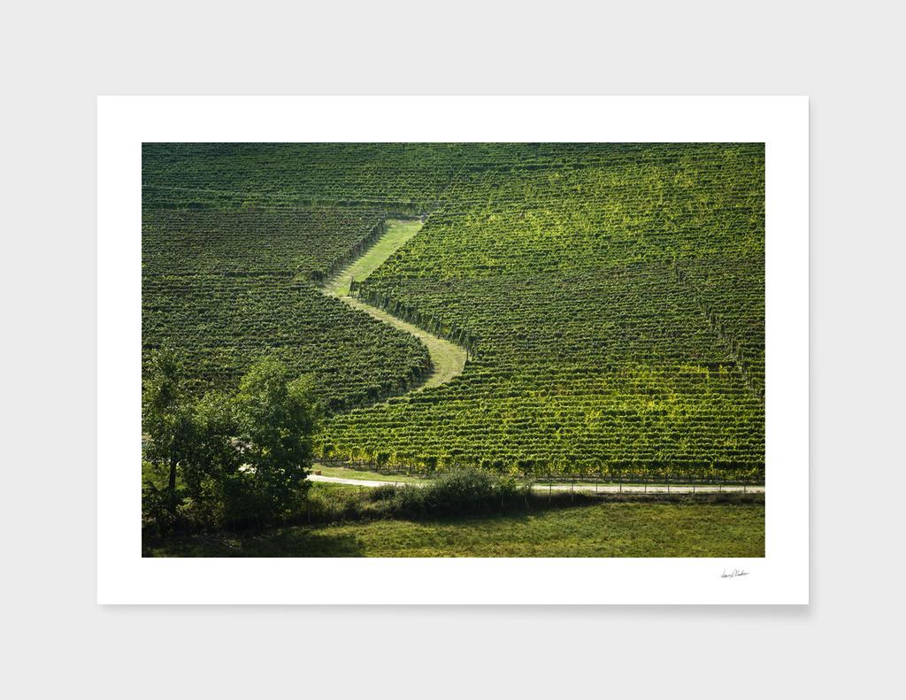 Italian vineyards. Calosso Piedmont 06