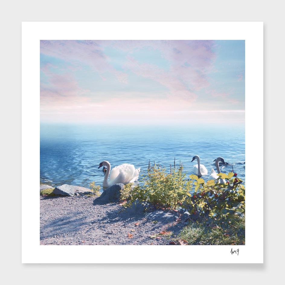 Pastel vibes 37 - Los Cisnes