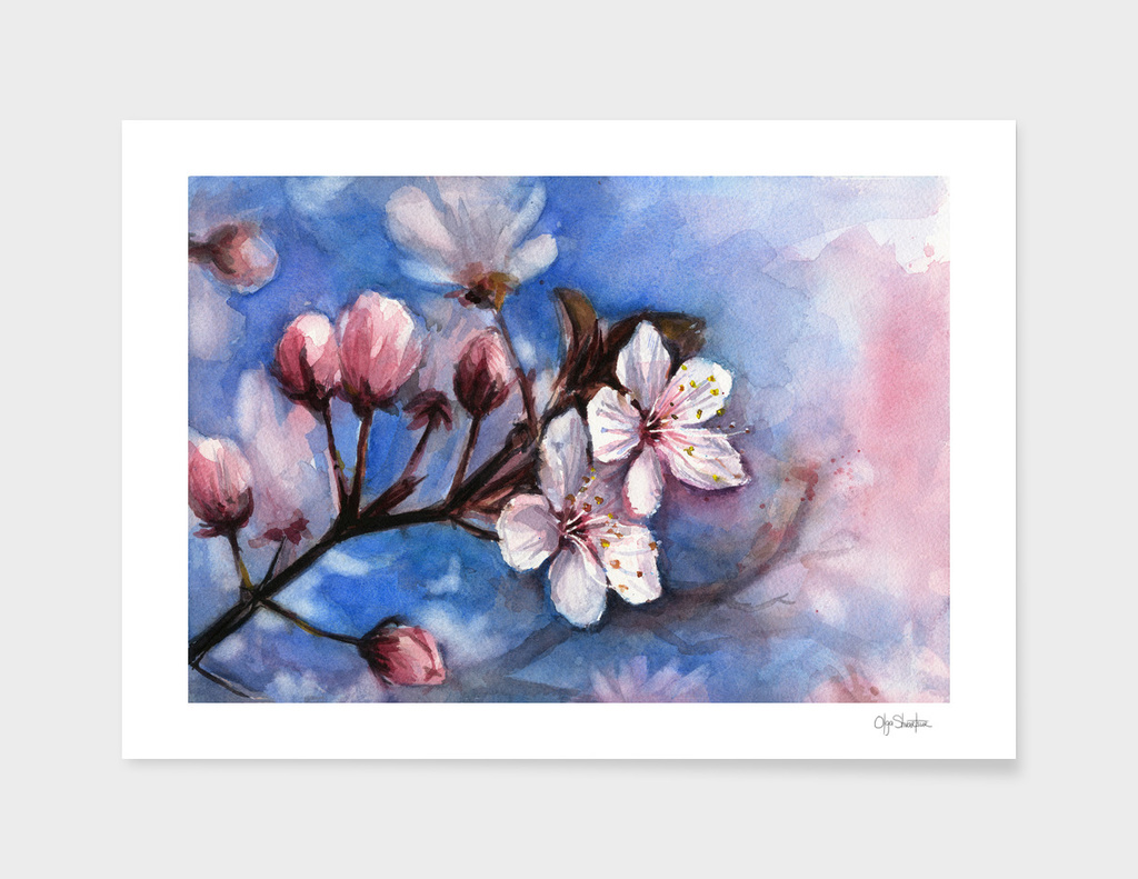 Cherry Blossom Watercolor