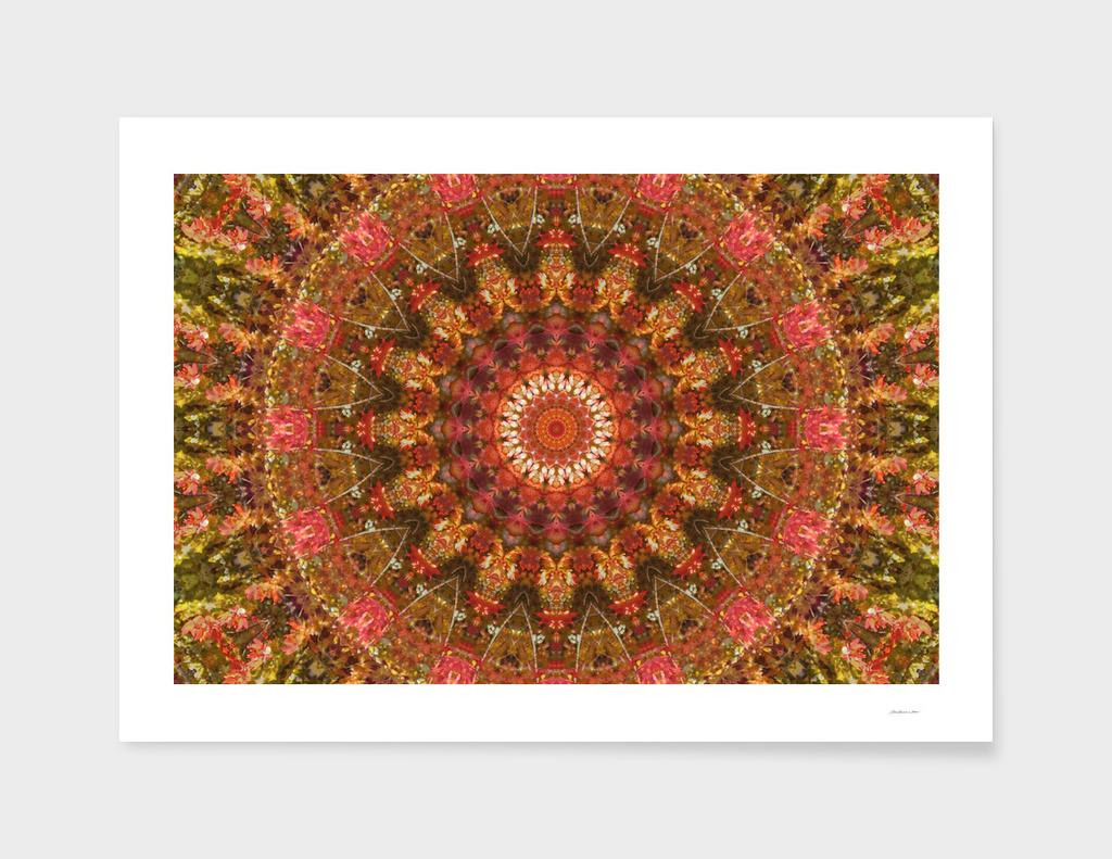 Foliage II Mandala