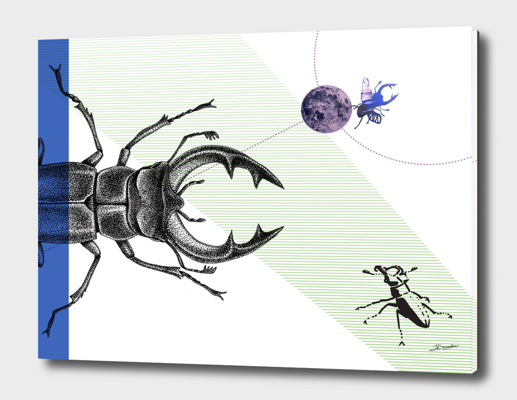 Universe of stag-beetle