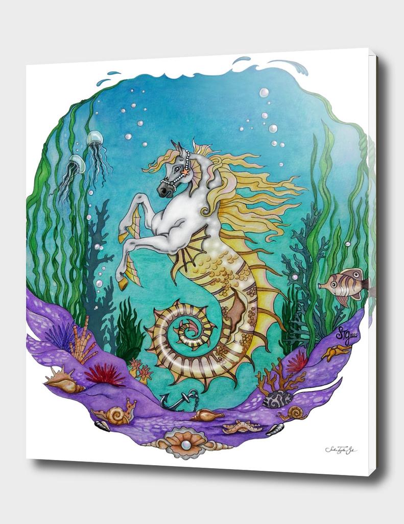 Arabian Seahorse