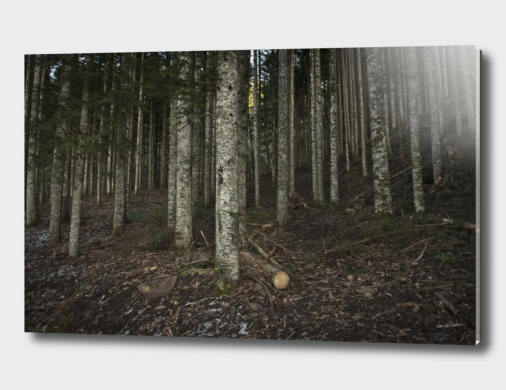 Foresta Aretina