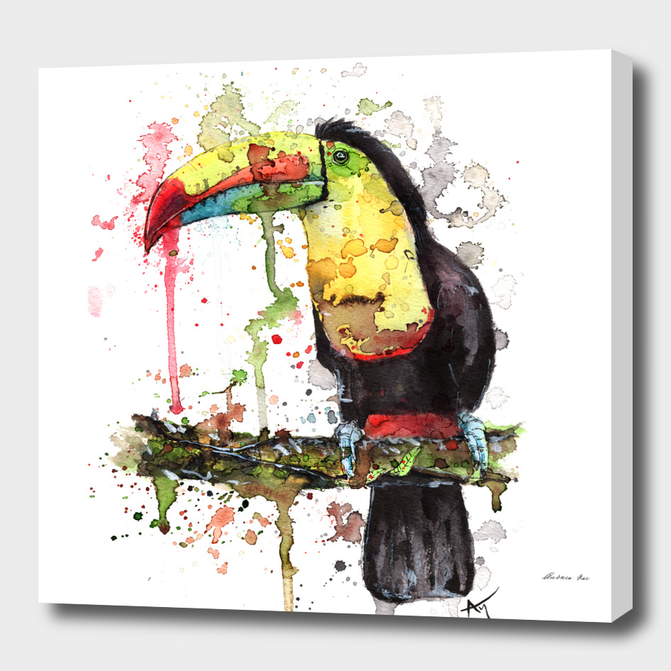 Toucan - Wildlife Collection