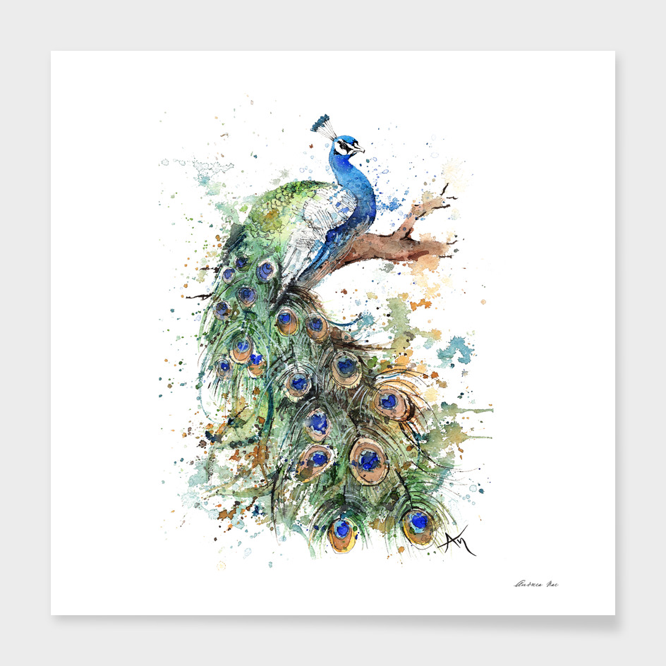 Peacock - Wildlife Collection