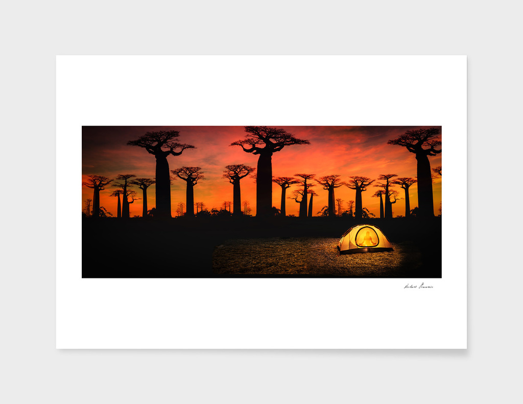 RDP-COMP 550019 Baobab Sunset Grove