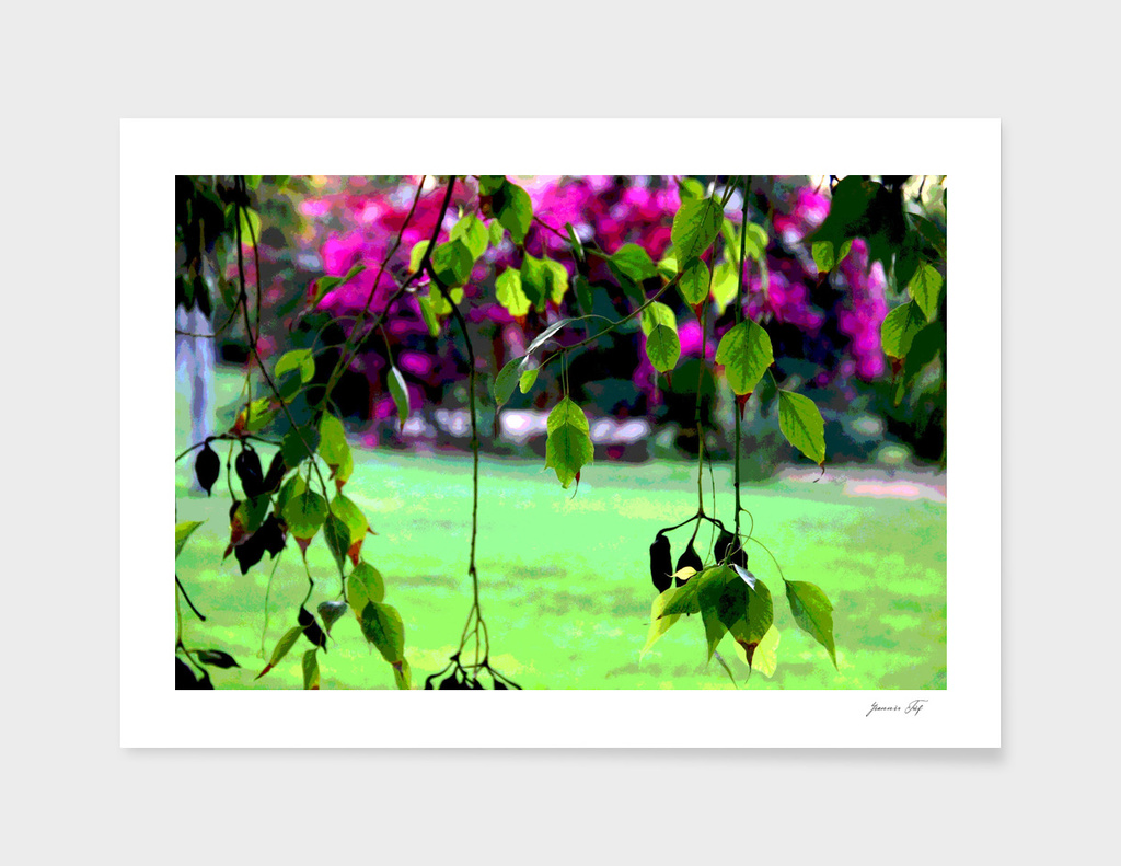 garden &leaves