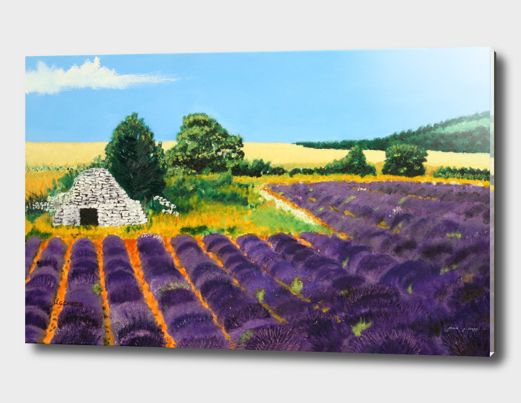 Afternoon Lavender Field