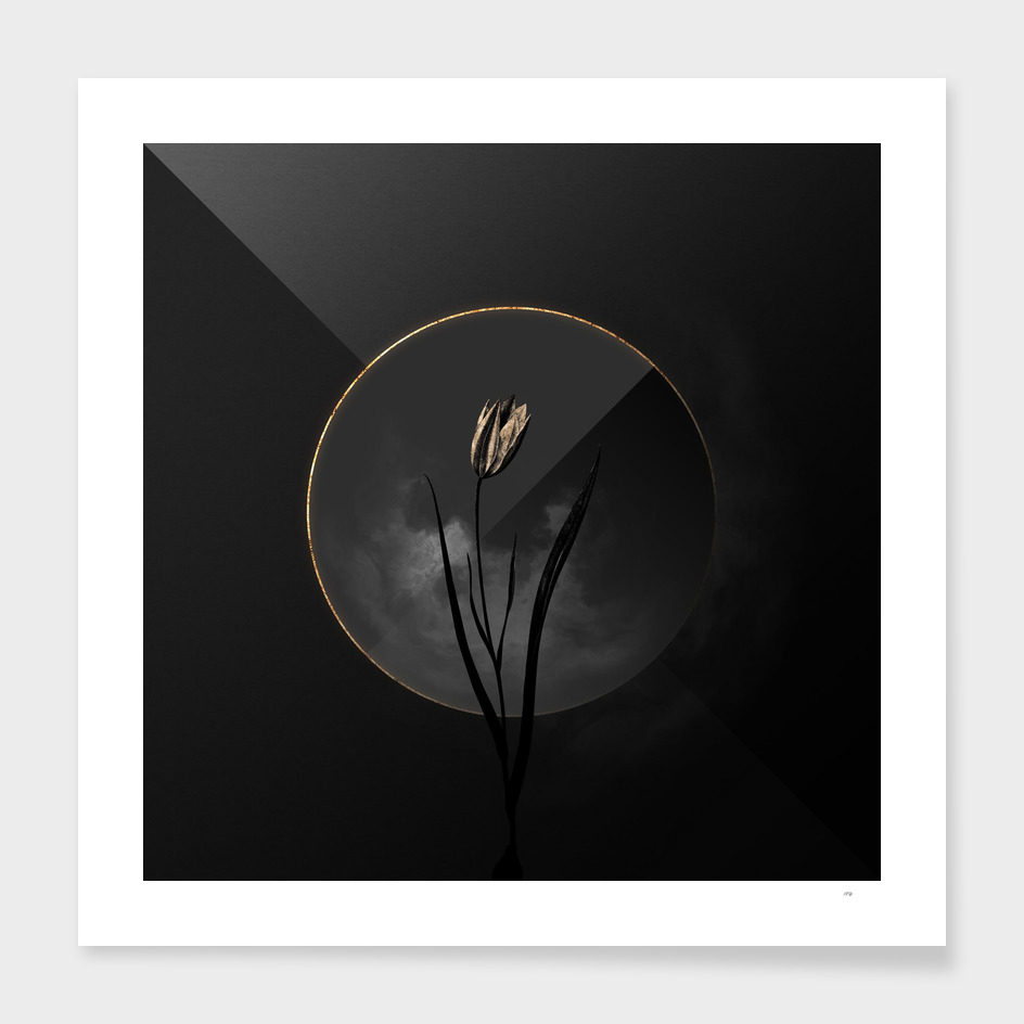 Shadowy Lady Tulip Botanical on Black and Gold