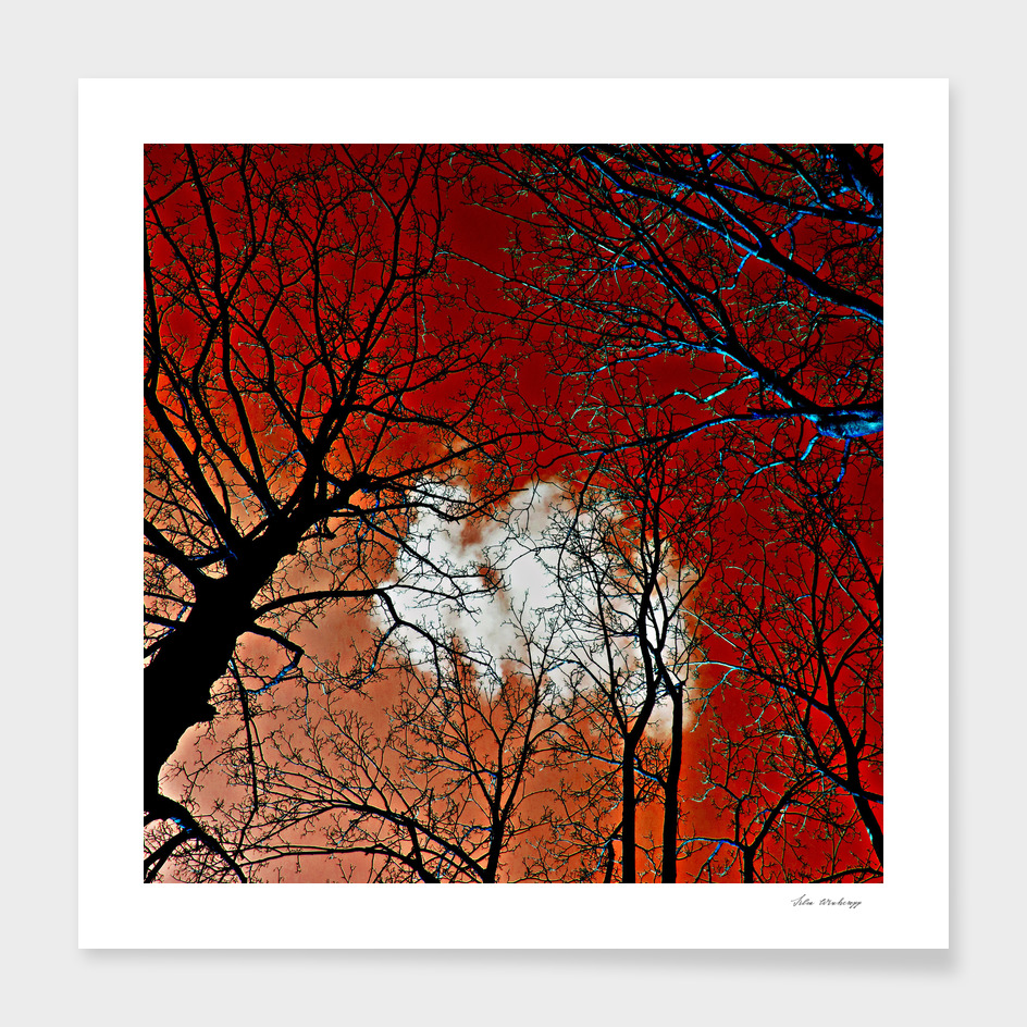 Red Meditative Power of Trees