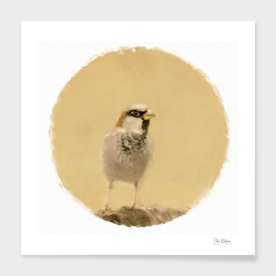 sparrow 17