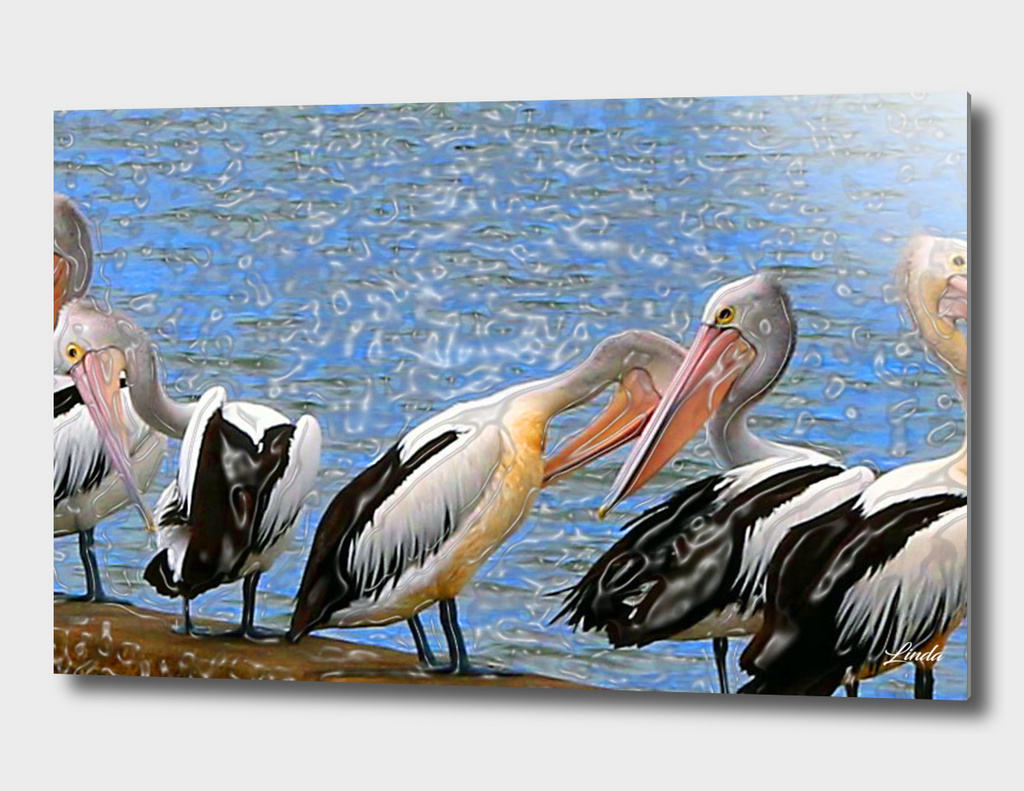 Pelicans All in a Row