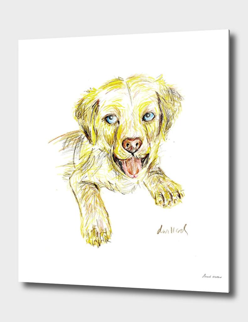 Cooper Golden Retriever Puppy