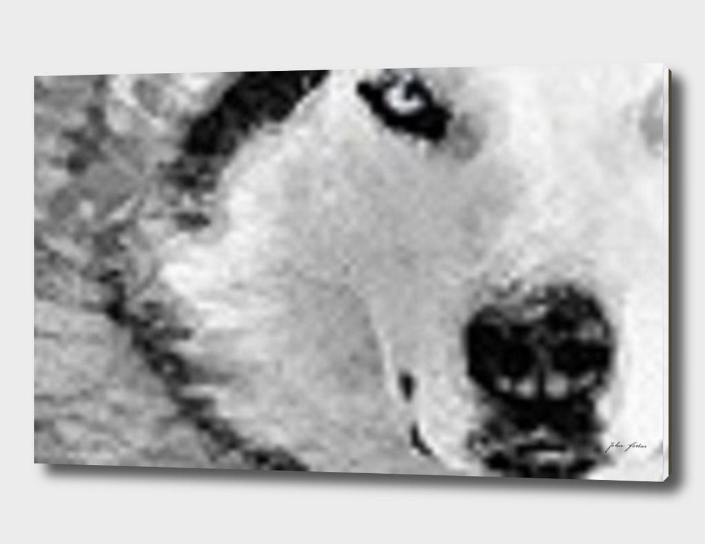 Siberian close-up