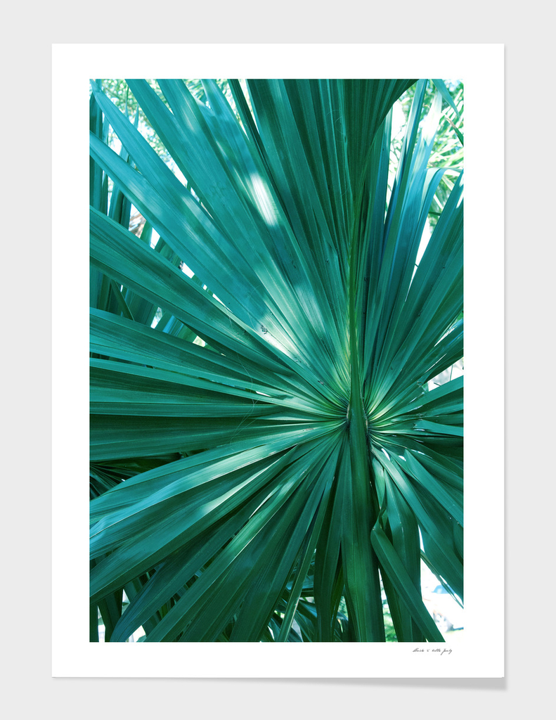 Tropical Fan Palm Finesse #1 #tropical #wall #decor #art