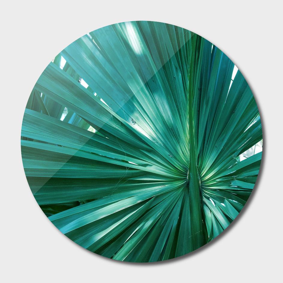 Tropical Fan Palm Finesse #1 #tropical #wall #decor #art