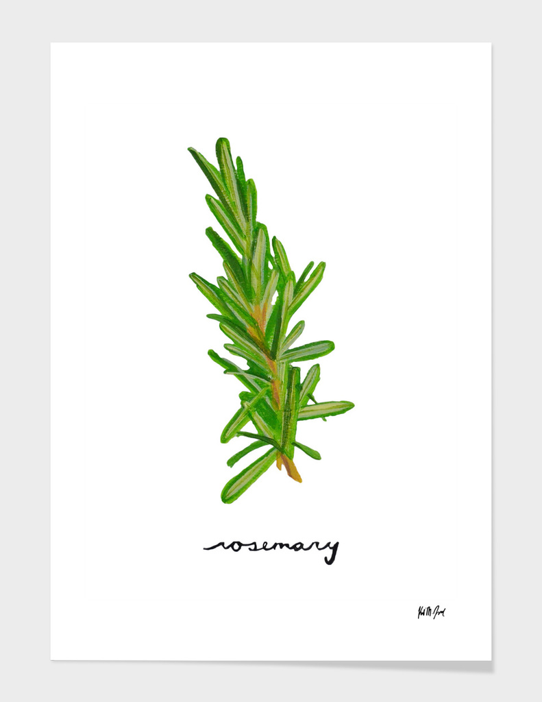 Herbs No.3 Rosemary