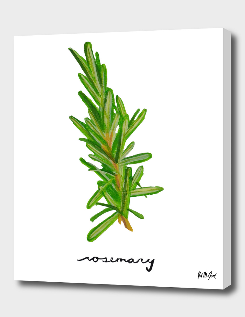 Herbs No.3 Rosemary