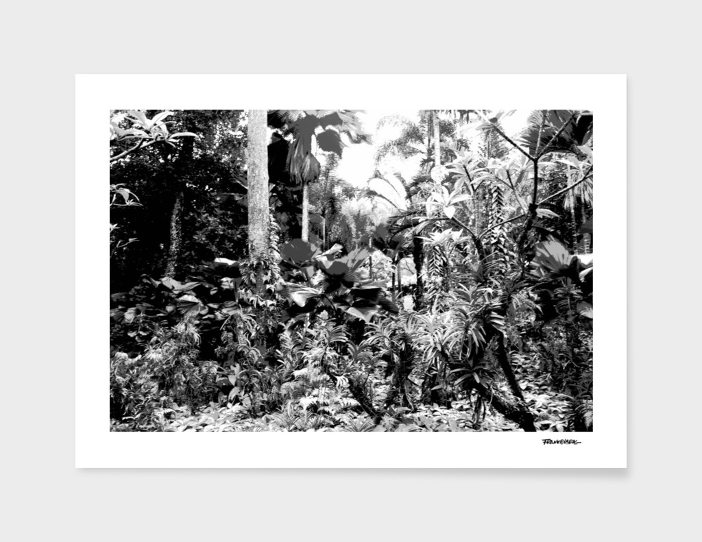 Singapore Botanical Garden 1 - Black & White