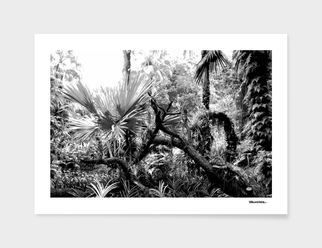 Singapore Botanical Garden 2 - Black & White