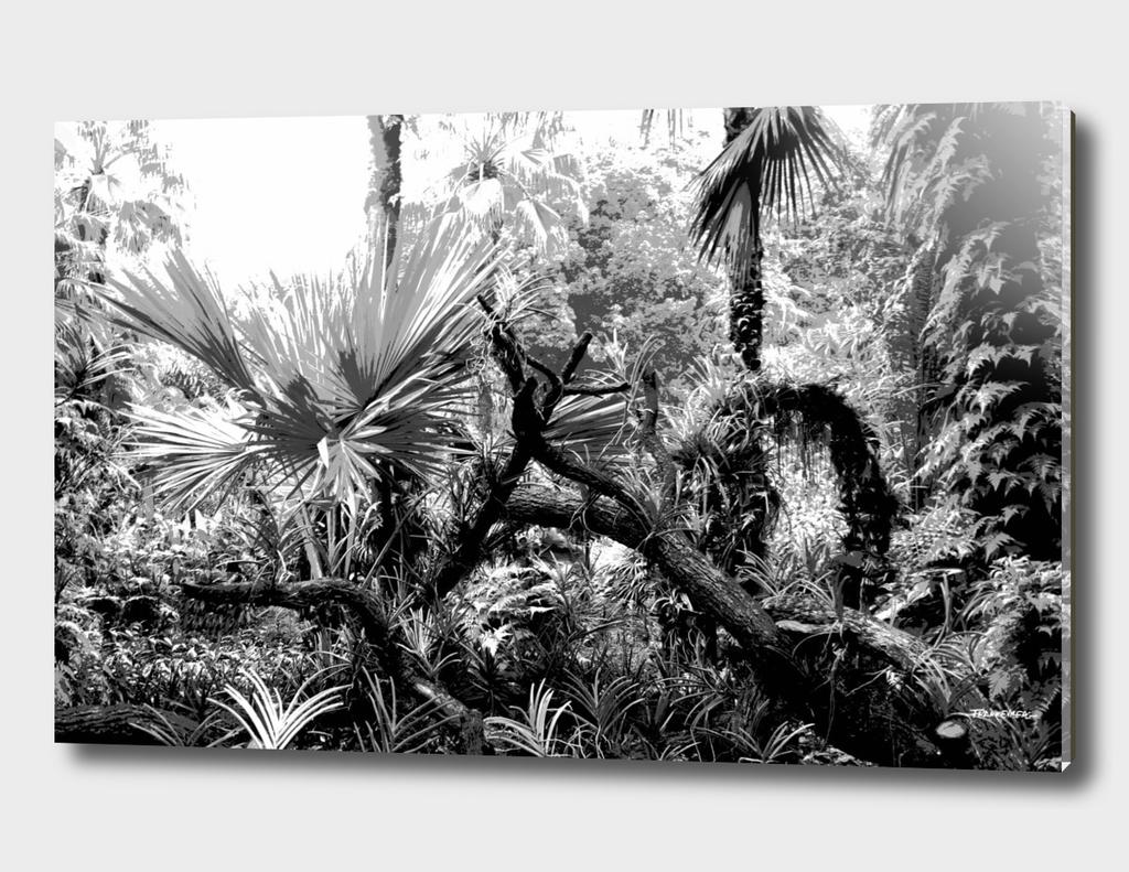 Singapore Botanical Garden 2 - Black & White