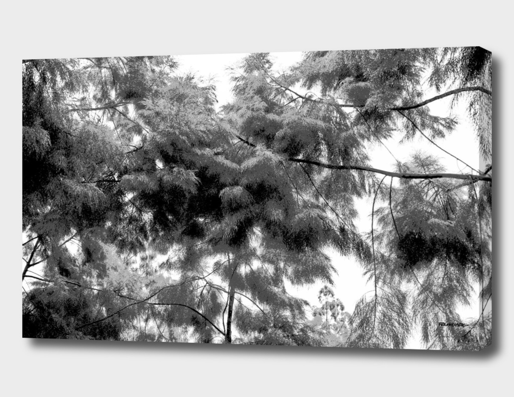 Singapore Botanical Garden 4 - Black & White