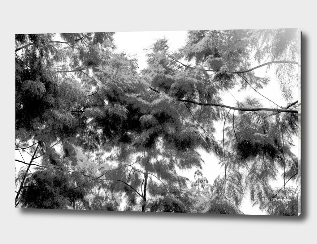 Singapore Botanical Garden 4 - Black & White
