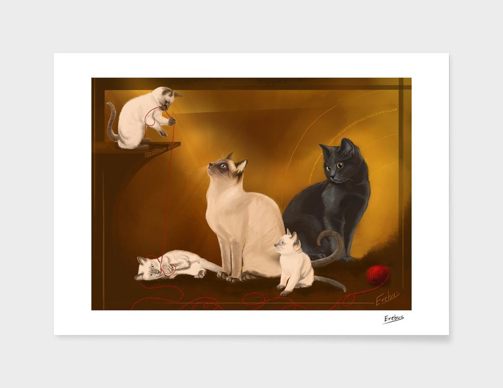 Tao Cats