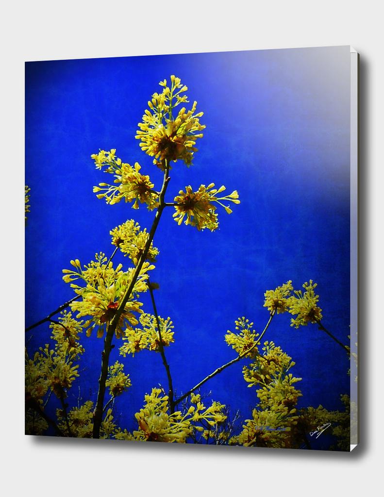 Sassafrass Flowers Deekflo