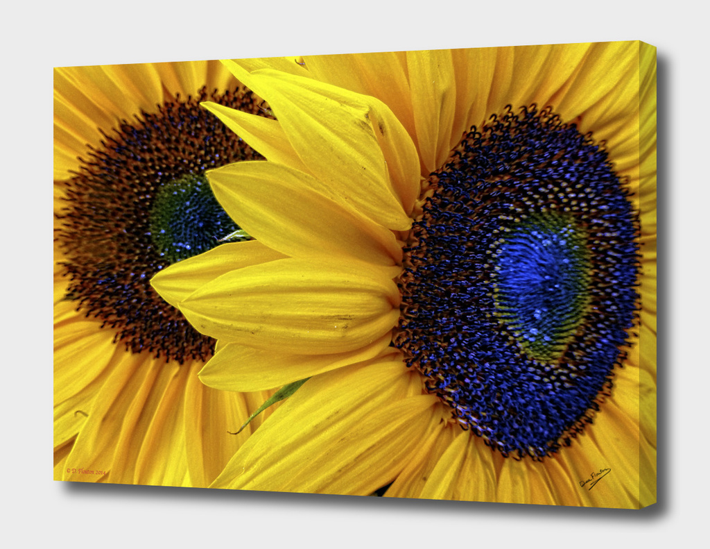 Sunflower Faces Deekflo