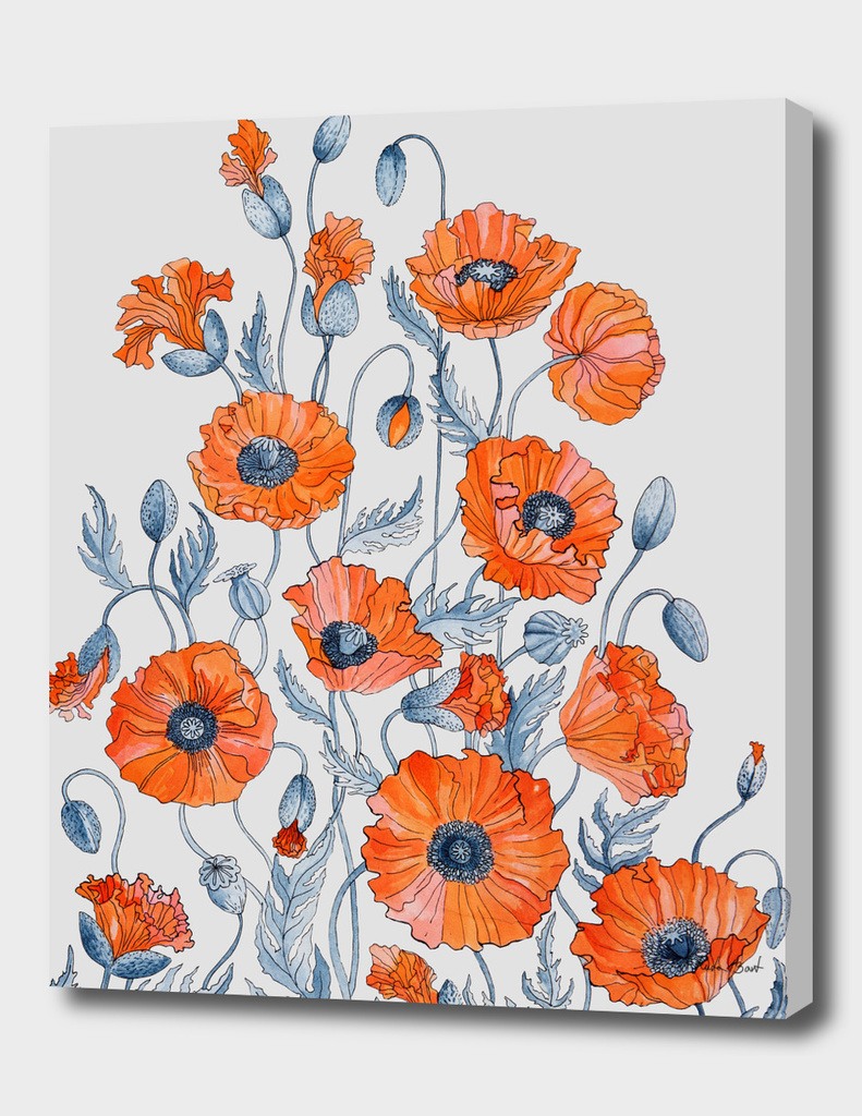 Poppies watercolor