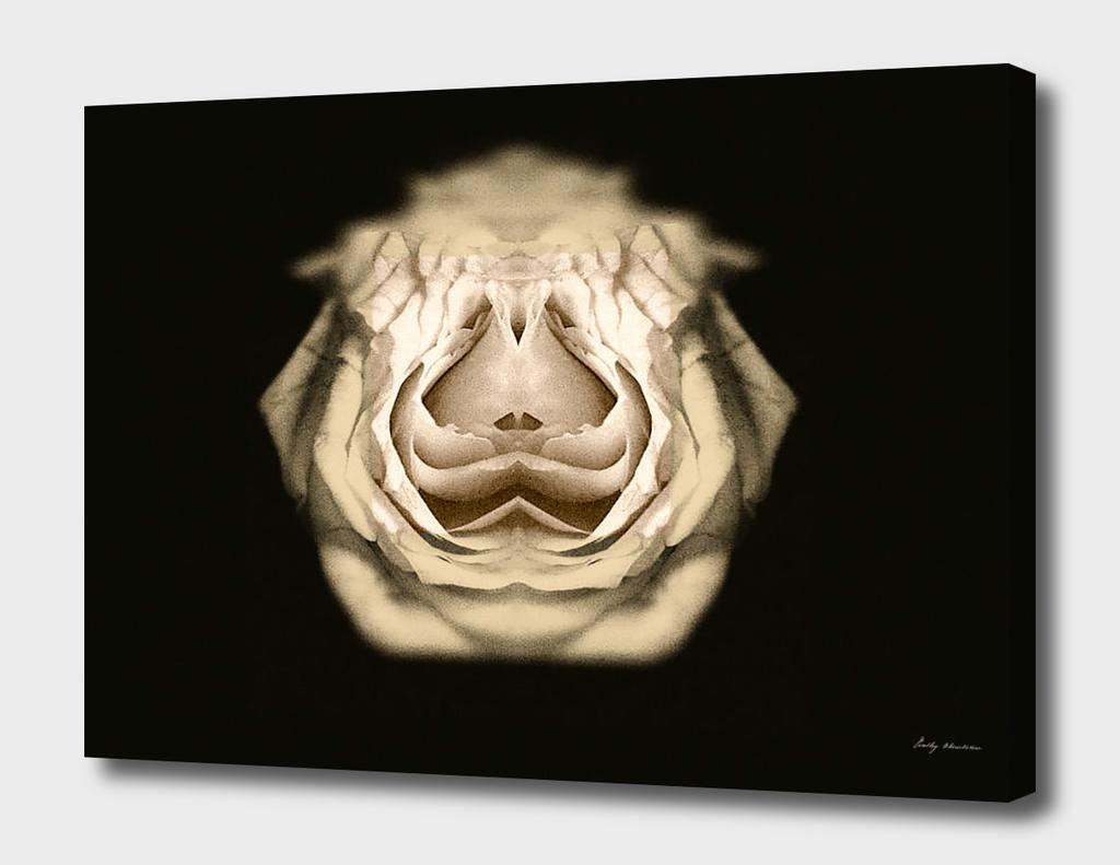 symmetry white flower