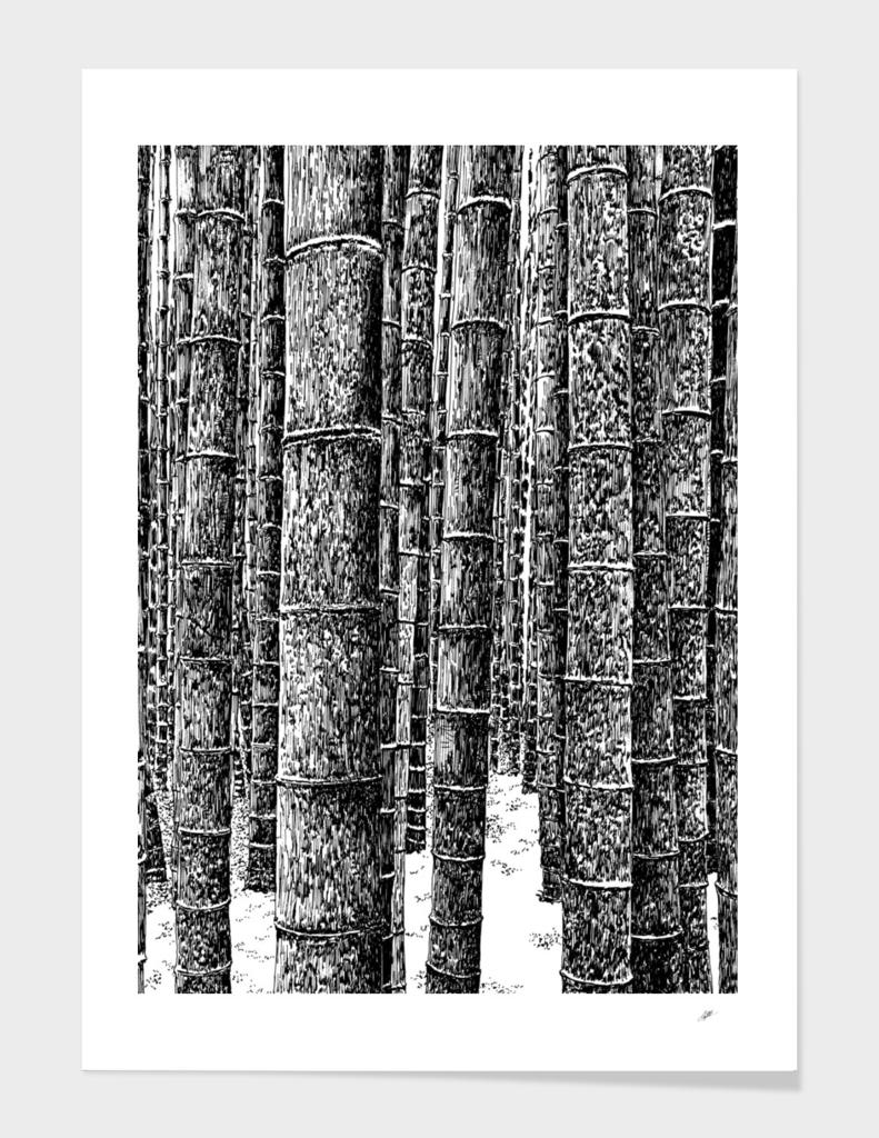 bamboo grove A