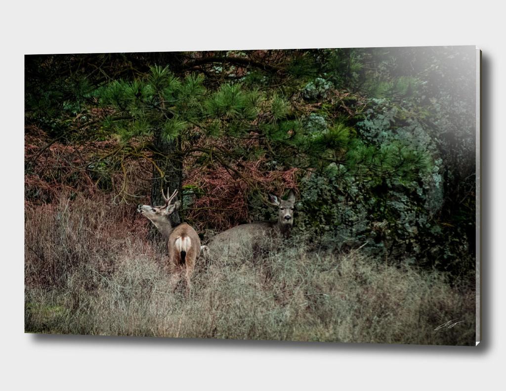 Mr. & Mrs. Deer