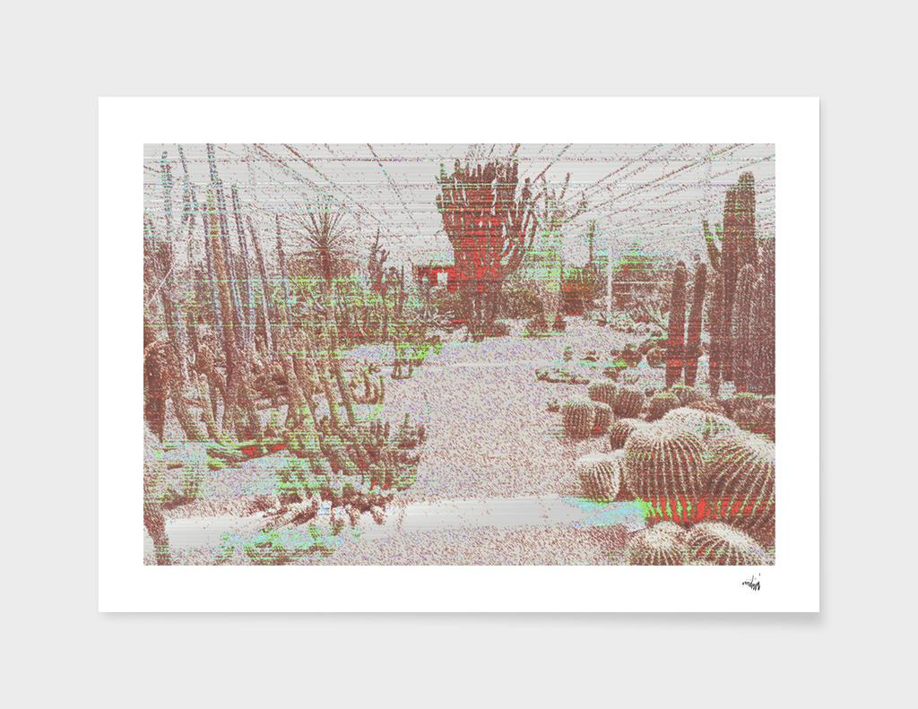 cactusoasis